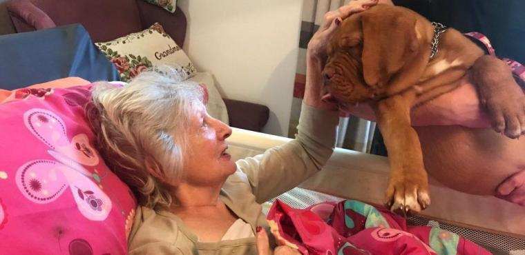 Pooches prove therapeutic for residents with dementia