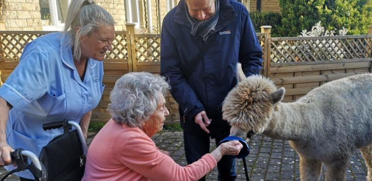 Alpacas a hit with elderly care home residents