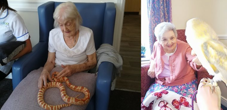Cold blooded creatures bring warm smiles to care home