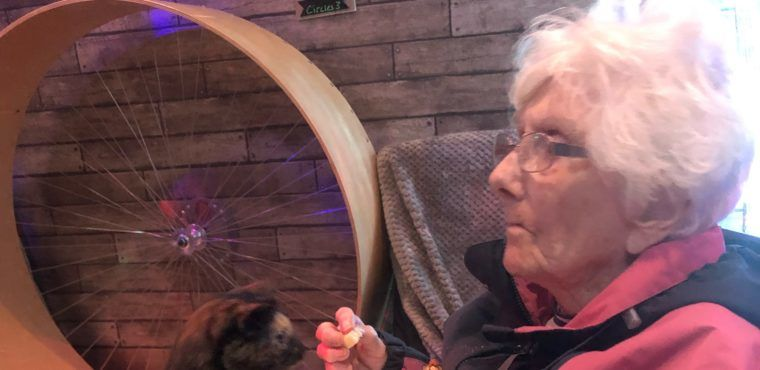 Elderly feline better after a visit to a cat café