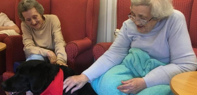 Betty the black Lab brings smiles to care home residents
