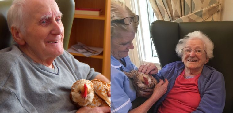 Chicken therapy for Merseyside care home residents