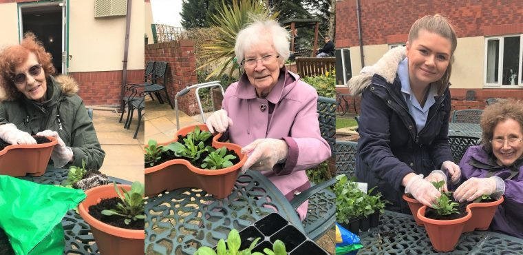 Green fingered care home residents enjoy gardening therapy
