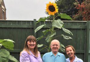 giant-sunflower-gables