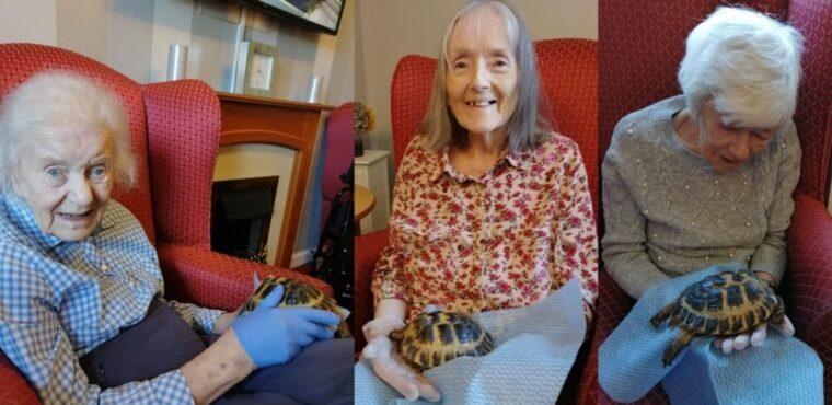 Boris and Doris the tortoises at Runcorn care home