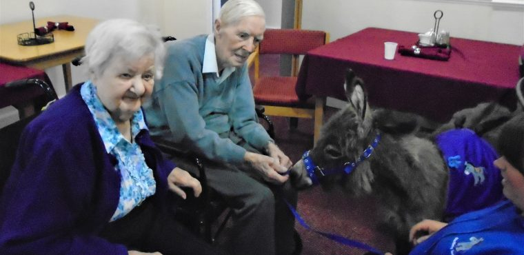 Teddy the donkey thrills Hartlepool care home residents